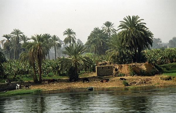 Nil. W konwoju na ziemi i na wodzie