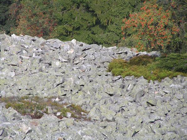 Łysogóry. Góry łyse, czyli gołe od boru