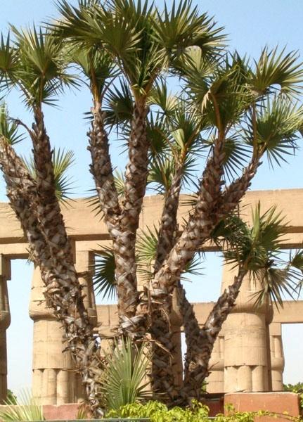 Luksor. W ruinach Karnaku i w Dolinie Królów
