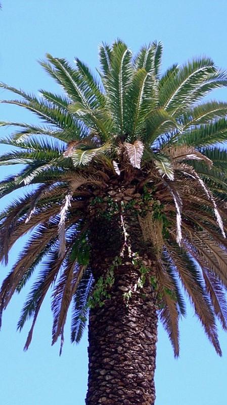 Rzym. Kto widział kwiaty w palmowym gaju