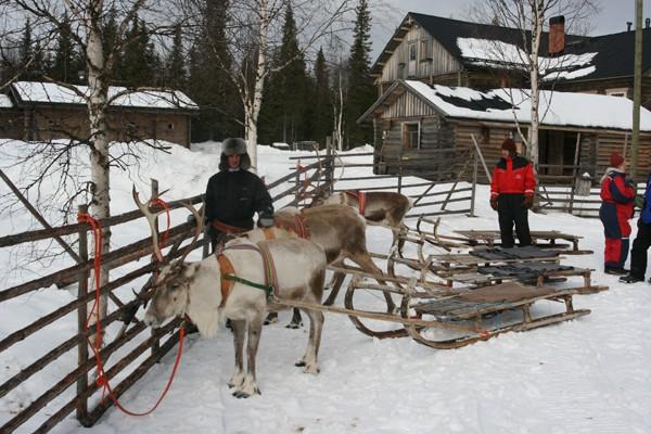 Rovaniemi Rumaki świętego Mikołaja