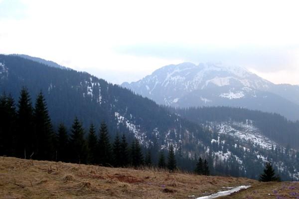Dolina Małej Łąki. Do najpiękniejszej tatrzańskiej polany