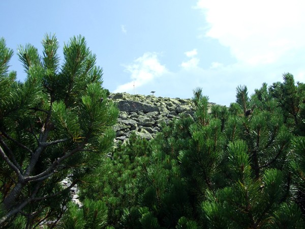 Chomiak Na szczyt śladami Orłowicza