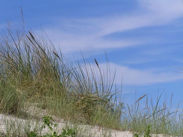 Pogorzelica. Z plaży pod sosnę