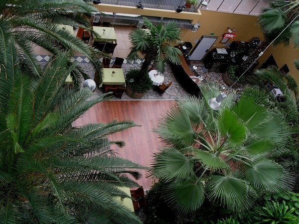 Zielona Góra. Palmiarnia w Winnym Parku