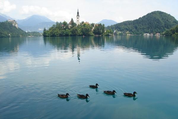 Bled Jezioro z wyspą pośrodku