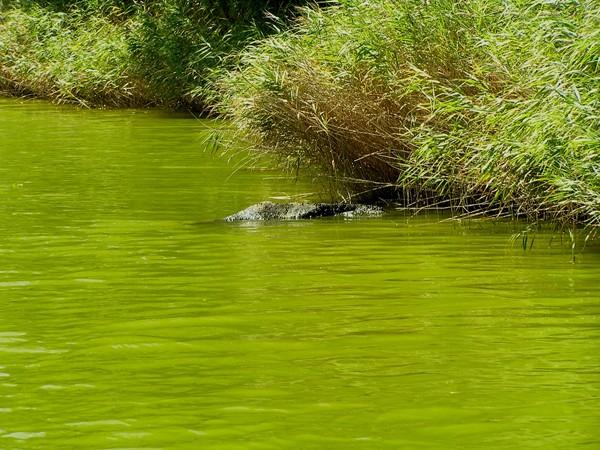 Ropotamo. Dziwnie zielona rzeka