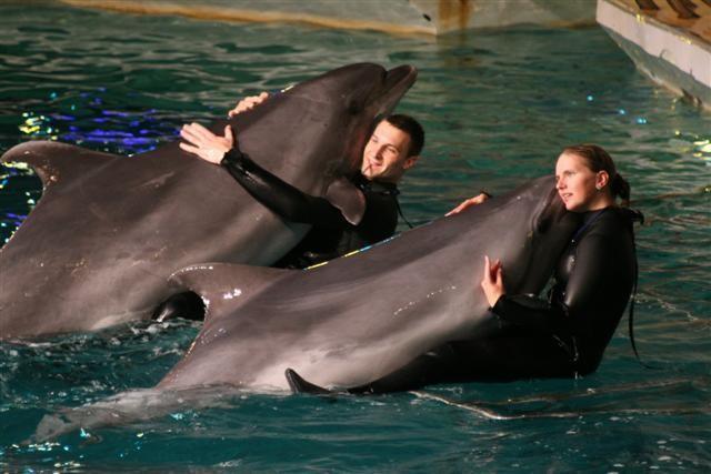 Kłajpeda Delfiny w starym forcie