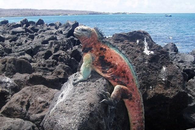 Galapagos Floreana, przez rozszalałą wodę