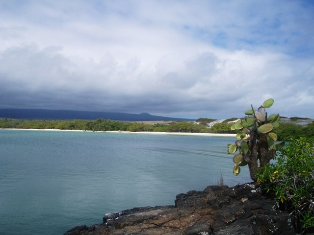 Galapagos. Na plaży Bahia Tortuga