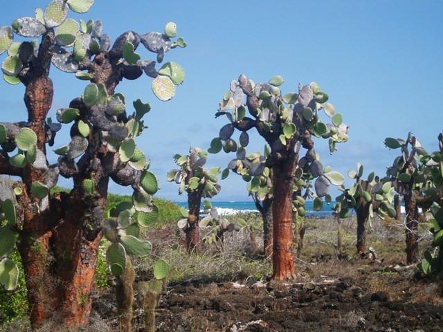 Galapagos Na plaży Bahia Tortuga