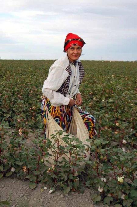 Uzbekistan. Gorączka na polach bawełny