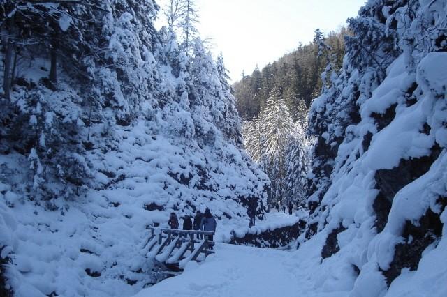 Dolina Białego. Nad skutym lodem potokiem
