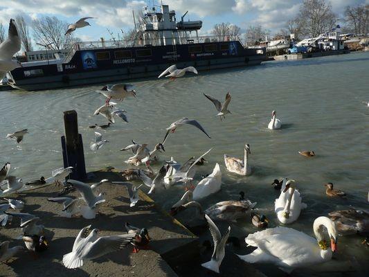 Balaton. Wokół skutego lodem jeziora