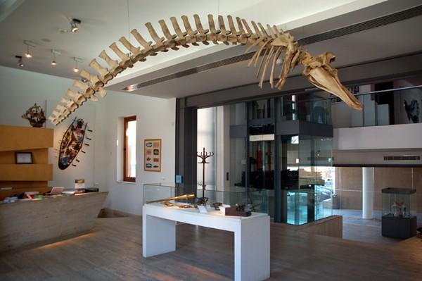 Agia Napa. Morskie muzea w morskim porcie