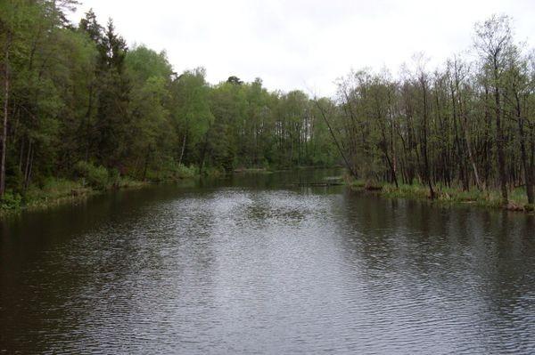 Augustów. Statkiem po Necku i Rospudzie