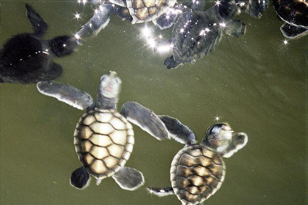 Sri Lanka. Ratownicy żółwi morskich