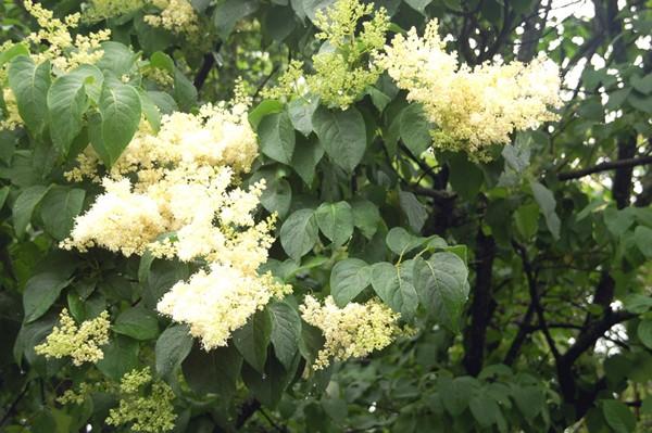 Kijów. Narodowy Ogród Botaniczny