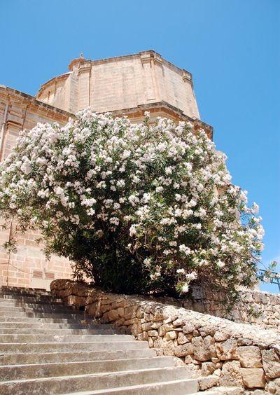 Mellieha. Sanktuarium w skałach wybrzeża