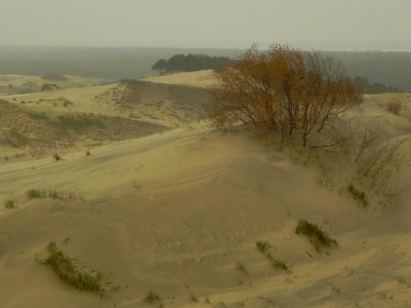Mierzeja Kurońska Na lotnych piaskach wydmy Epha