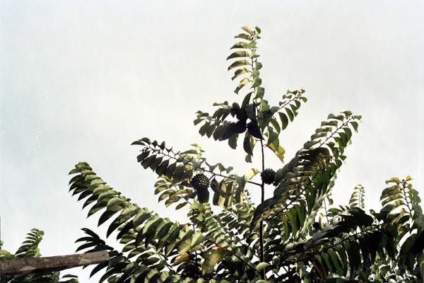 Borneo. Tam, gdzie pieprz rośnie