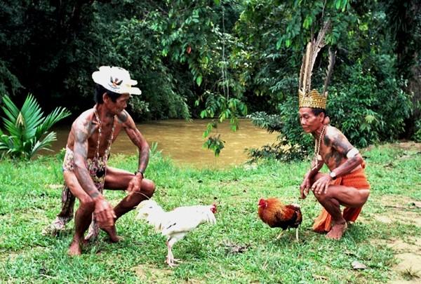 """Borneo W """"długim domu"""" Ibanów"""