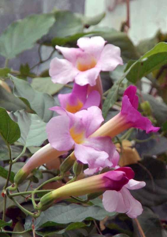 Akamas. Dzika przyroda i ogród botaniczny