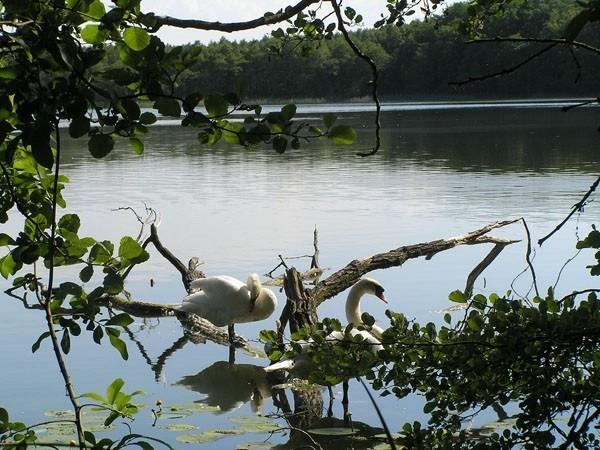 Jezioro Czajcze Najpiękniejsze jezioro na wyspie Wolin