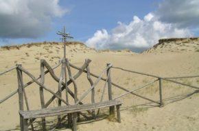 Mierzeja Kurońska Kopy lotnych piasków w sosnowym lesie