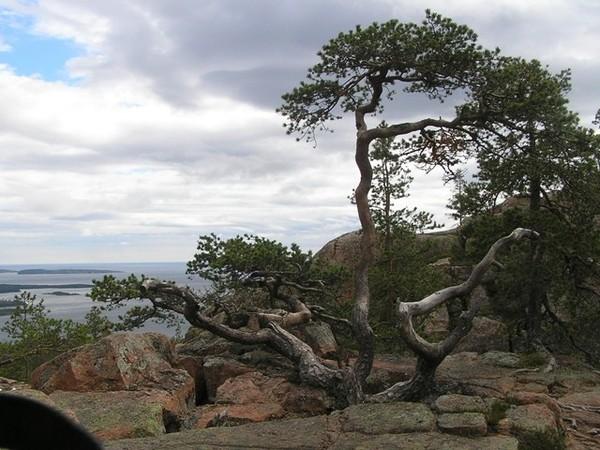 Skuleskogen Po groźniejszej stronie Bałtyku