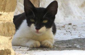 Kos Agora należy do kotów