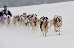 Donovaly Wyścigi psich zaprzęgów