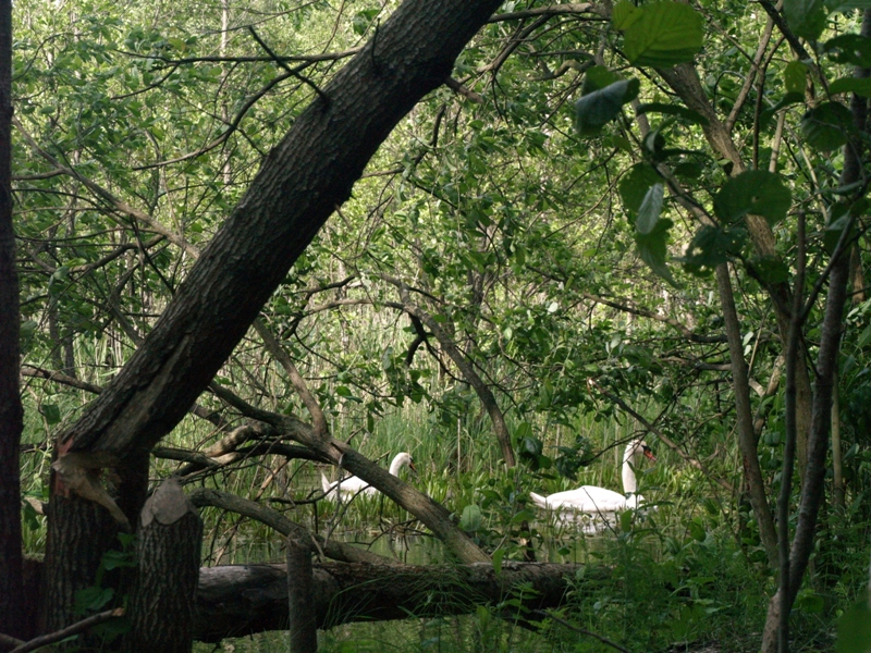 Stolec. Ptasi rezerwat nad jeziorem Świdwie