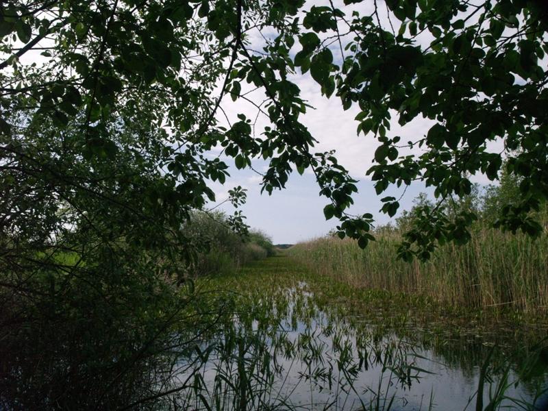 Stolec Ptasi rezerwat nad jeziorem Świdwie