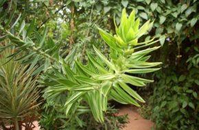 Akamas Dzika przyroda i ogród botaniczny