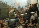 Zakopane. Przyroda w Muzeum Tatrzańskim