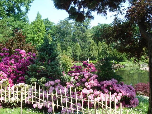 Wrocław. Japoński ogród w Parku Szczytnickim