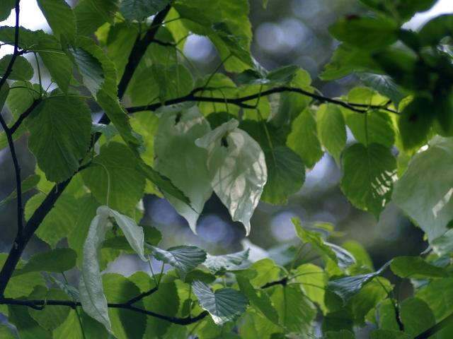 Przelewice Znów kwitnie ogród dendrologiczny
