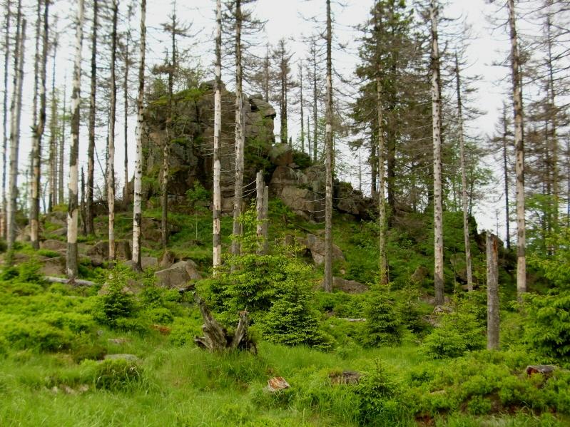 Harz. Tropem Goethego z TorfHaus na Brocken