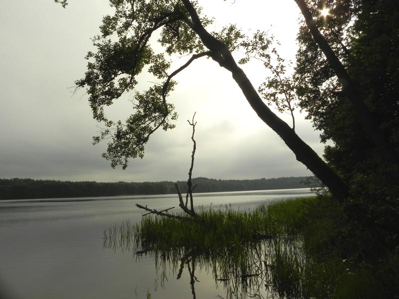 Wolność. Spojrzenie na Zaborski Park Krajobrazowy