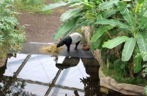 Lipsk Zoo, czyli największe tropiki w Europie