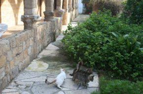Kapo Gata Monastyr św. Mikołaja od kotów