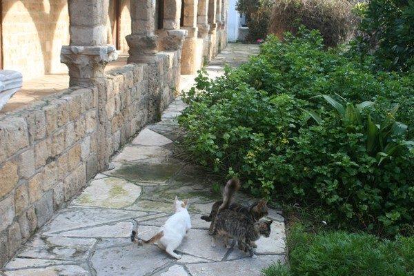 Kapo Gata. Monastyr św. Mikołaja od kotów