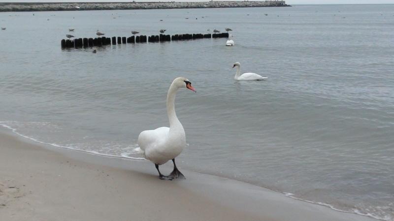 Ustka. Zimowy spacer przez nadbałtyckie plaże