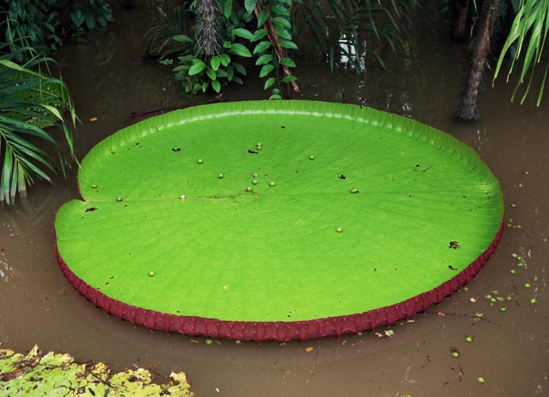 Iquitos. Łodzią w stronę amazońskiej dżungli