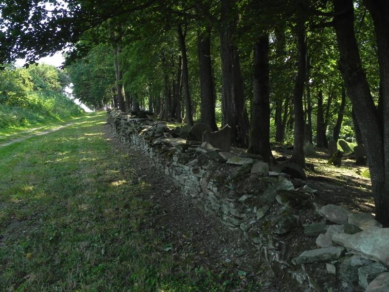 Nowy Żmigród. Macewy stoją na wzgórzu przy drodze