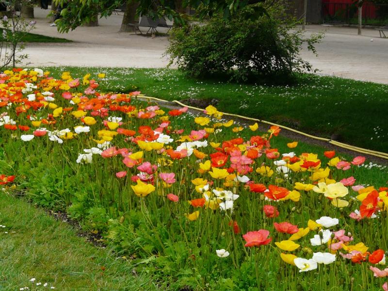 Paryż. Ogród Botaniczny i Muzeum Przyrodnicze