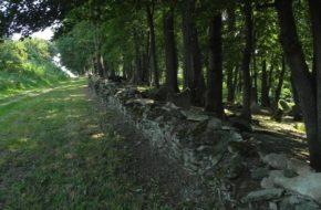 Nowy Żmigród Macewy stoją na wzgórzu przy drodze