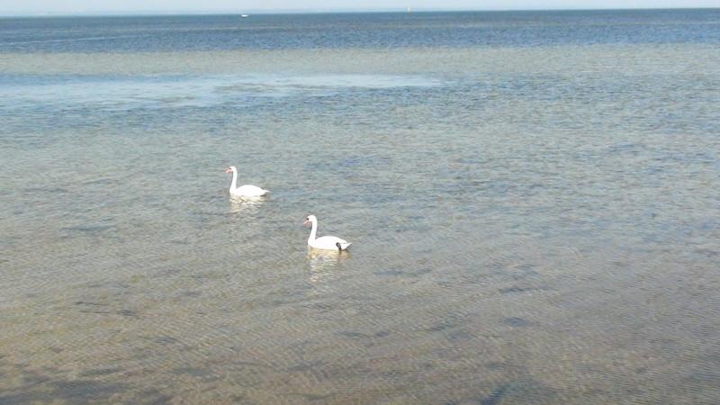 Jurata. Kąpielisko morskiej boginki