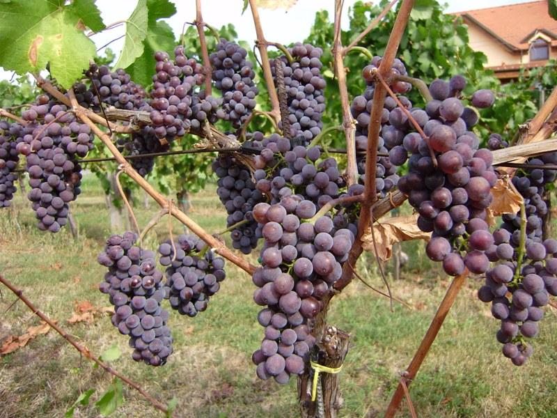 Kiszyniów. Narodowy Dzień Wina w Mołdawii